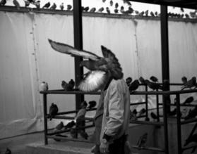 Nasos Zovoilis, The birdman (Griechenland, Europa)