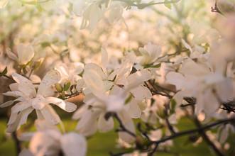 Alexander Barth, Blüten (Deutschland, Europa)