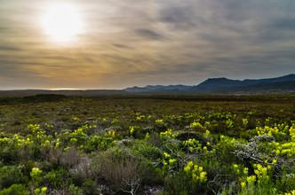 Fynbos-Vegetation am Kap der Guten Hoffnung - fotokunst von Ralf Germer
