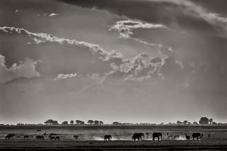 Franzel Drepper, Elefants at Ihaha - Botswana (Botswana, Afrika)