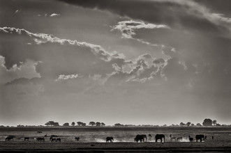 Franzel Drepper, Elefants at Ihaha - Botswana (Botswana, Africa)
