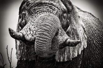 Franzel Drepper, Portrait of a white elephant (Namibia, Africa)