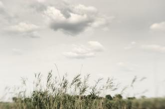 Franzel Drepper, Papyrus in the Okavango Delta - Botsuana (Botswana, Afrika)
