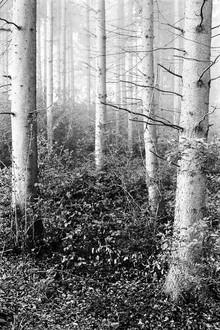 estructura de árbol - fotokunst von Andreas Odersky