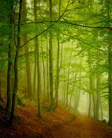Torsten Muehlbacher, Fog (Austria, Europe)