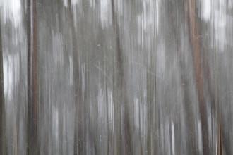 Schneeforst - fotokunst von Jens Rosbach