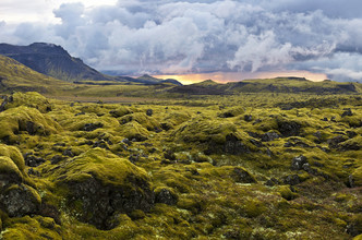 Markus Schieder, Surreal landscape with wooly moss at sunset in Iceland (Island, Europa)