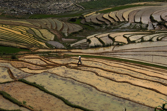 Florian Justus Jaeger, Rice fields in Vietnam (Vietnam, Asia)