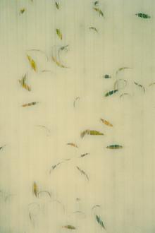 Erwin Fischer, Autumn (Deutschland, Europa)