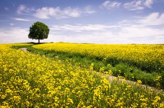 Heiko Gerlicher, The Joys Of Spring (Deutschland, Europa)