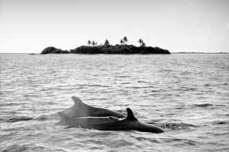 Thomas Herzog, D E L F I N E (Malediven, Asien)