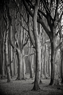 J. Daniel Hunger, Baum #3 sw (Deutschland, Europa)