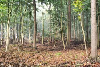 Stefan Wensing, Blick in den Wald (Deutschland, Europa)
