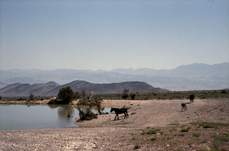Kevin Russ, Horses at Waterhole (United States, North America)