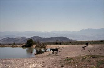 Kevin Russ, Horses at Waterhole (Vereinigte Staaten, Nordamerika)