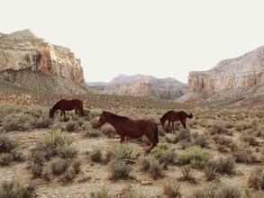 Kevin Russ, Southwest Wild Horses (Bermuda, Nordamerika)