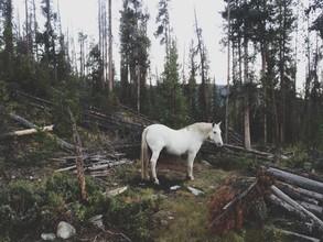 Kevin Russ, White Forest Horse (Vereinigte Staaten, Nordamerika)