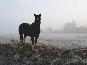 Kevin Russ, Frosty Morning Horse (Vereinigte Staaten, Nordamerika)