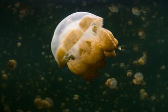 Boris Buschardt, Jellyfish Lake (Mikronesien, Australien und Ozeanien)