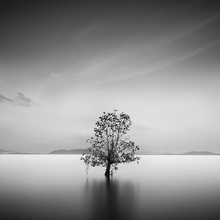 Life - Fineart photography by How Pin Tang