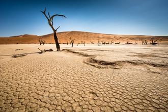 Michael Stein, Dead Trees in Dead Vlei #01 (Namibia, Africa)