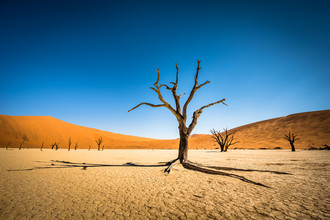 Dead Trees in Dead Vlei #02 - fotokunst von Michael Stein