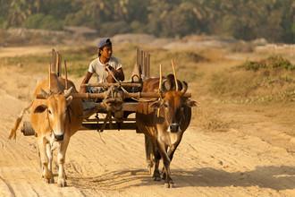 Marc Rasmus, Bullock Boy (Myanmar, Asien)