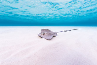 Boris Buschardt, Stingray (Cayman Islands, Latin America and Caribbean)