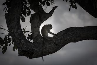 Marc Rasmus, Baboon Yoga (Botswana, Africa)