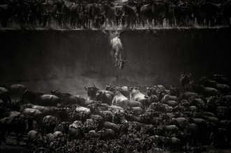 Nicole Cambré, The Great Migration (Zambia, Africa)