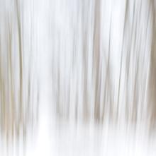 Stefan Wolpert, Waldweg im Winter (Deutschland, Europa)