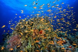 Christian Schlamann, Red Sea reef (Egypt, Africa)