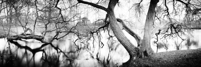 Bäume am See - fotokunst von Jan Benz