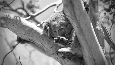 Manuel Kürschner, afternoon rest (Australia, Oceania)