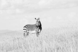 Eva Stadler, Zebra (Südafrika, Afrika)