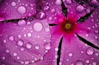 Simone Sbaraglia, Water Drops (Madagaskar, Afrika)