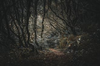 Jean Claude Castor, Madeira - Geisterwald (Portugal, Europa)