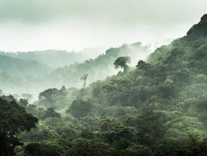 Johann Oswald, Der Nebelwald von Monteverde 3 (Costa Rica, Lateinamerika und die Karibik)