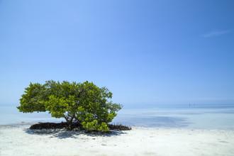 Melanie Viola, FLORIDA KEYS Einsamer Baum (Vereinigte Staaten, Nordamerika)
