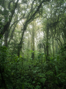 Johann Oswald, Santa Elena Cloud Forest 1 (Costa Rica, Latin America and Caribbean)