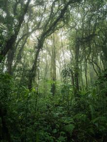 Johann Oswald, Santa Elena Cloud Forest 1 (Costa Rica, Lateinamerika und die Karibik)