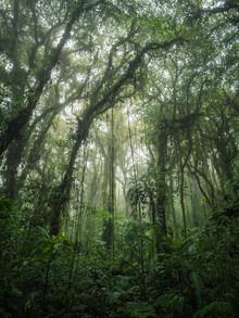 Johann Oswald, Santa Elena Cloud Forest 2 (Costa Rica, Lateinamerika und die Karibik)