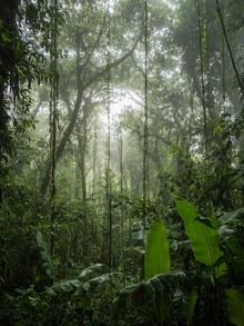 Johann Oswald, Santa Elena Cloud Forest 3 (Costa Rica, Lateinamerika und die Karibik)
