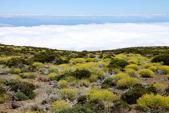 Eberhard Vogler, Teide Tenerife (Spain, Europe)