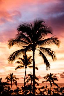 Cristof Bals, Hawaiian Glow 2 (Vereinigte Staaten, Nordamerika)