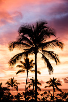 Cristof Bals, Hawaiian Glow 2 (United States, North America)