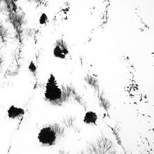Martina Fischer, Tanne im Schnee (Schweiz, Europa)