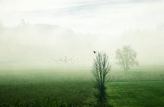 Martina Fischer, Aufbruch im Nebel (Deutschland, Europa)