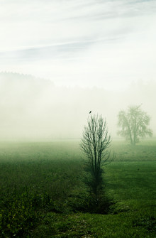 Martina Fischer, Stille im Nebel (Deutschland, Europa)