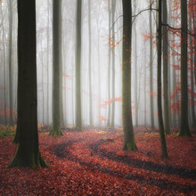 Tracks - Fineart photography by Carsten Meyerdierks